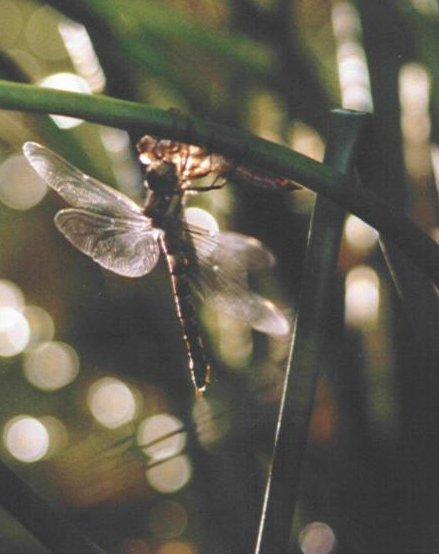 Fluegeltrocknen